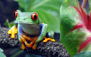 Costa Rica an eco wonderland whose wealth is its wildlife