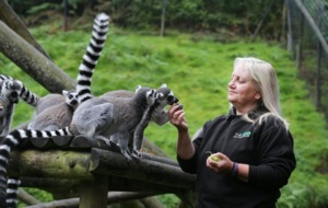 Belfast Zoo defended in face of closure demands