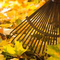 The Casual Gardener: The DIY grower's autumn windfall