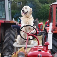 All the fun of the fair at the Spa Harvest and vintage show Ballynahinch, Co Down