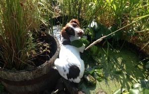 The Casual Gardener: Dog days in the garden
