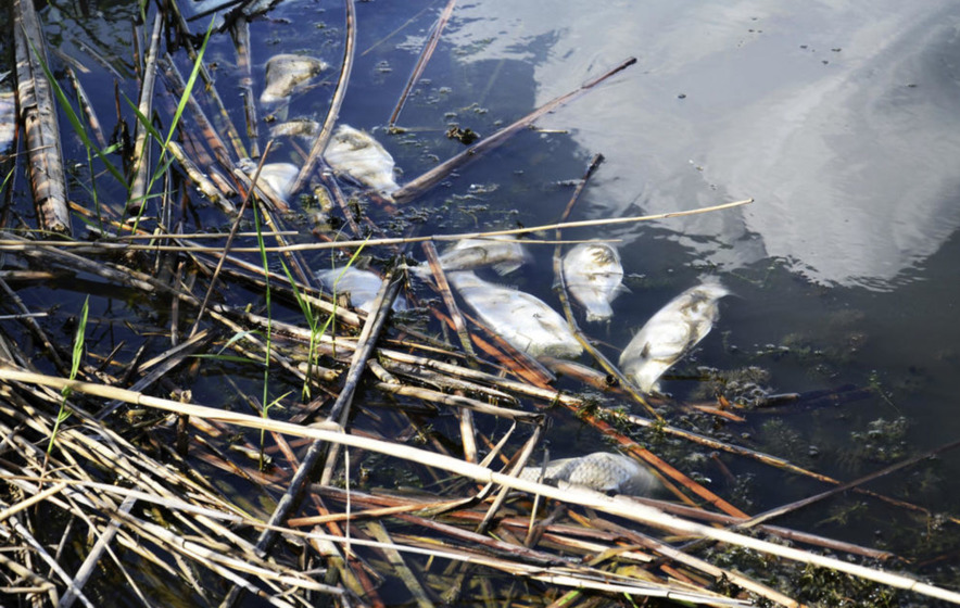 More than 1,600 fish killed by chemical spill in Carrig River near Newcastle