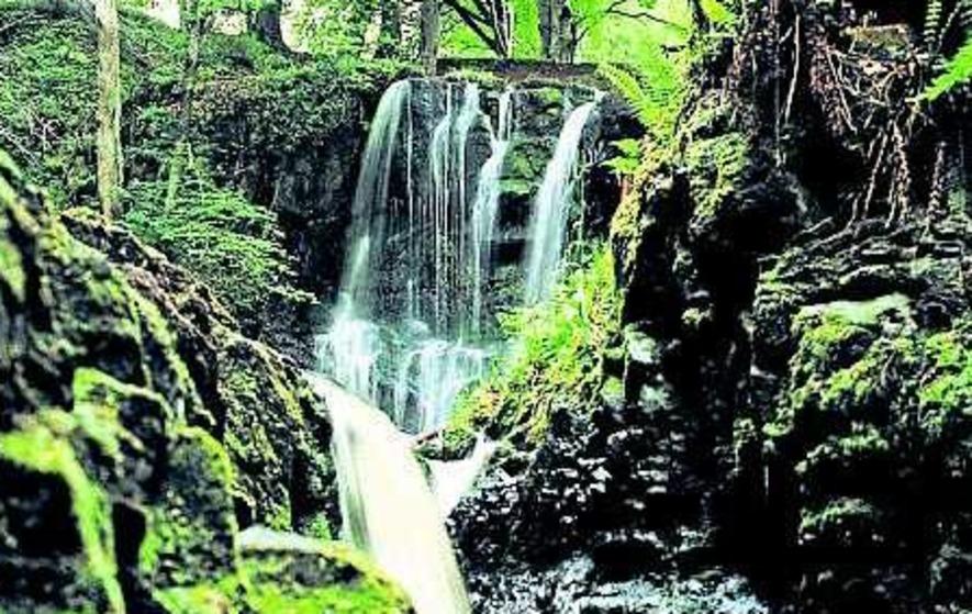 £1m 'glamping' site for Glenariff Forest Park