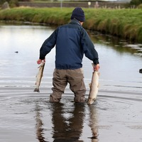 Major Co Down fish kill is third caused by NI Water in three years
