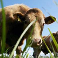 Foyle Food Group back in profit after securing US export green light