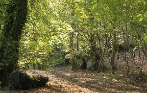 Historic north Belfast wood to get £50,000 facelift