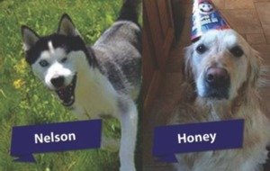 It's a dog's life - three pooches are voted top Pet Heroes
