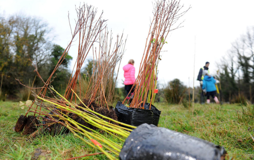 Tree planting scheme aims to boost Ireland's forest coverage