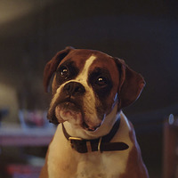Video: A family let its dog play on a trampoline and it was nothing like the John Lewis advert