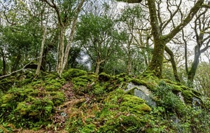 Outdoors: Release you inner tree – and a walk on Divis Mountain