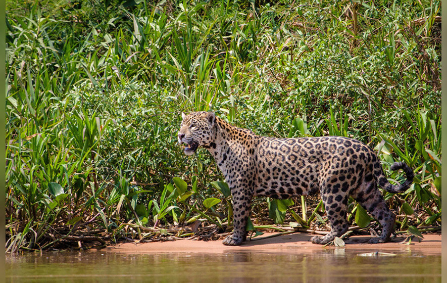 Planet earth ii preview glimpse what 39 s in store in sunday - Plante jungle ...