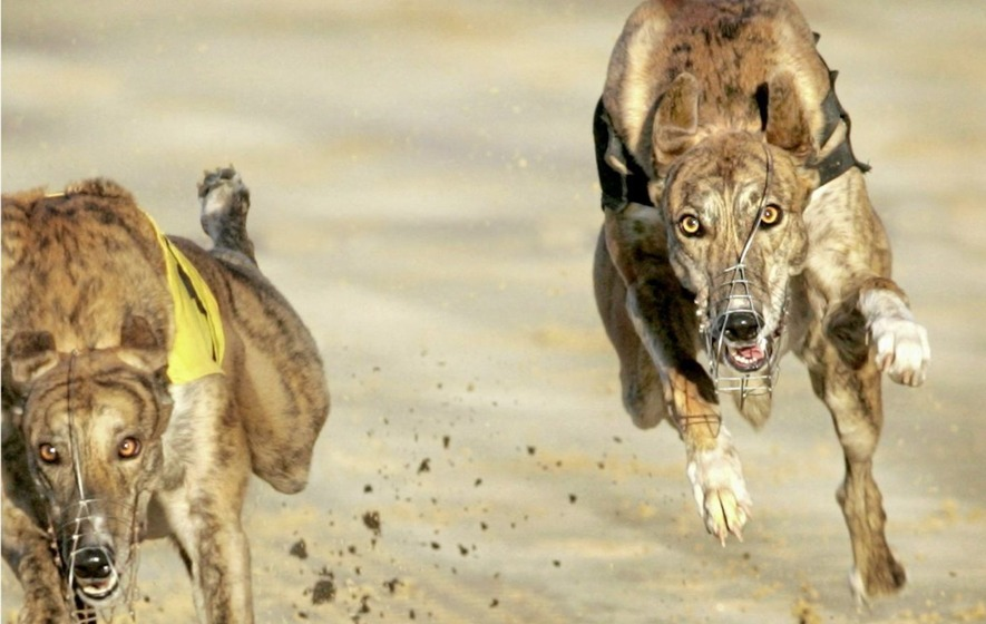 Greyhound racing: Christmas Box final at Drumbo, double dogs and horse racing action at Dundalk
