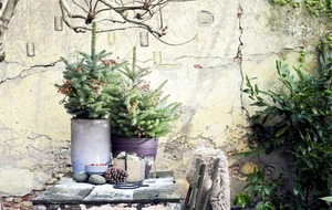 The Casual Gardener: Spruce up your life