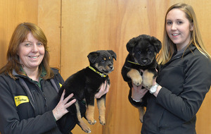 Stop buying puppies as Christmas presents, say Dogs Trust