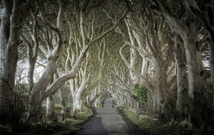 Dark Hedges is one of the 10 most beautiful streets in the world according to Architectural Digest Magazine