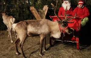 Santa's reindeer are shrinking which could spell disaster for the delivery of our Christmas presents