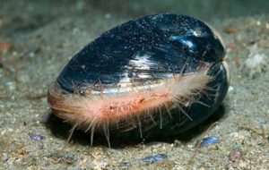 220-year-old shellfish among rare wildlife protected by new conservation zones