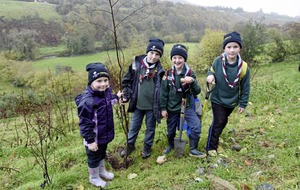 Outdoors: Tree planting scheme aids greening of the north