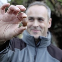 Oldest Oak tree in Ireland shows signs of life