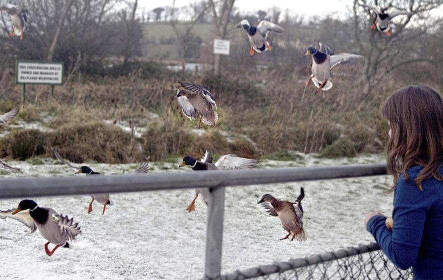 Strain of bird flu detected in duck in Co Wexford
