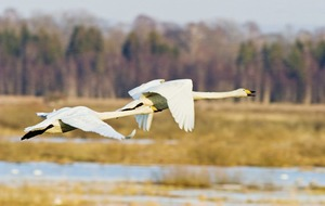 Outdoors: Ever wanted to try birdwatching? Now's your chance