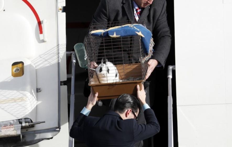 Meet Marlon Bundo: Mike Pence's pet bunny