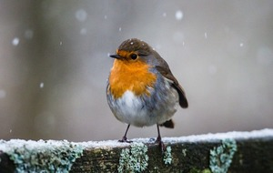 Video: These animals are enjoying snow more than you