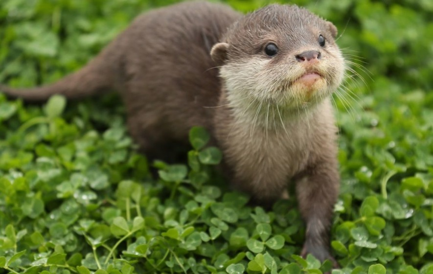 countryfile sparks debate with segment on otters the irish news