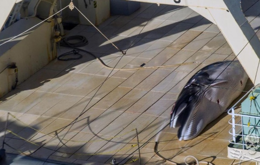 Photos show a Japanese boat whaling in an Australian whale sanctuary, according to campaign group
