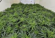 Cannabis worth €37.5 million seized at Dublin Port