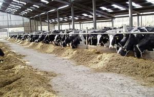 Agri-Food Biosciences Institute boosts health kick of dairy