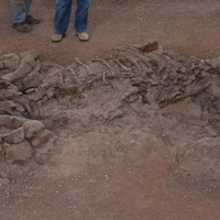 Scientists have found soft tissue remains inside a 195-million-year-old dinosaur rib