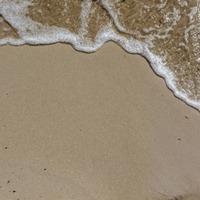 Australian beach covered in a carpet of bright blue jellyfish