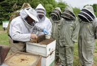 Outdoors: It's all buzz for all-Ireland bee weekend