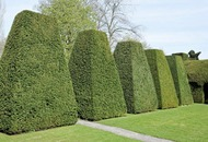 The Casual Gardener: Shear artistry of topiary lost on me, I'm afraid
