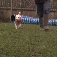 This adorable pooch is getting the pacemaker she needs on Valentine's Day