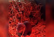 Otter pup born at Exploris Aquarium