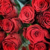Pakistan just banned public Valentine's Day celebrations