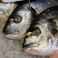 University's internet brought down by cyber-attack making vending machines search for seafood