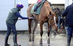 Willie Mullins keen to have Champion Hurdle tilt with Limini