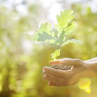 Take On Nature: Tree planting takes me back to my roots