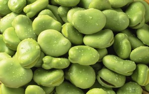 The Casual Gardener: Broad beans are simply magic – for growing, taste and colour