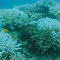 The Great Barrier Reef has been hit by mass bleaching for the second year in a row