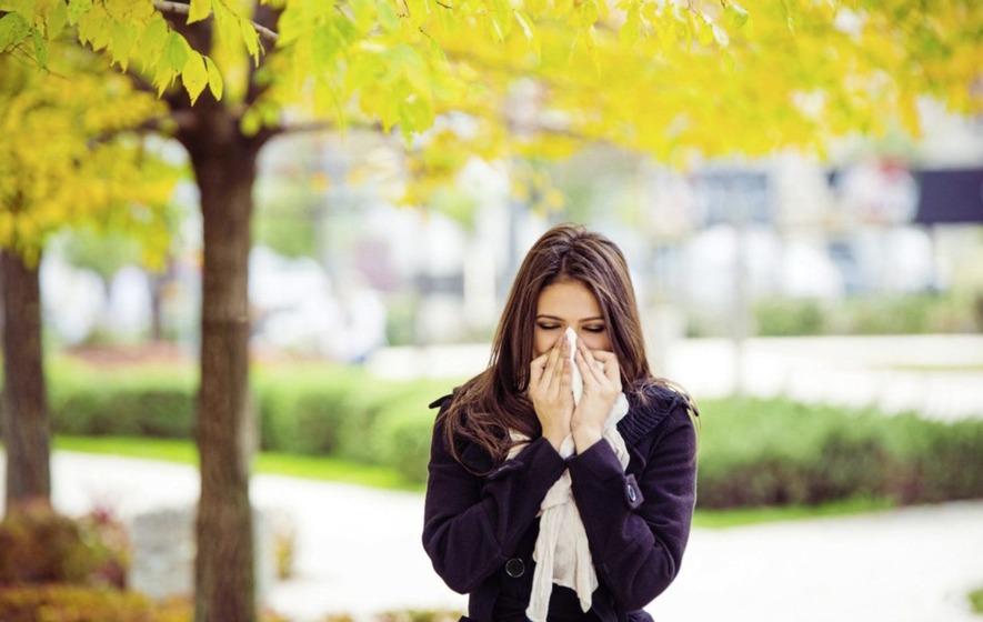 Tree pollen provokes sneezes