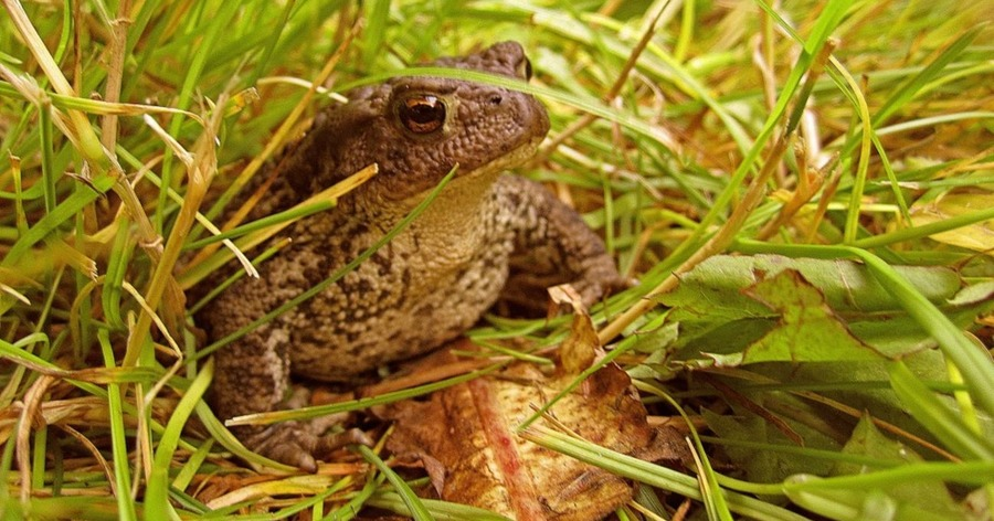20c8c08d5 Man creates tiny hats for a toad that just hung out on his porch all ...