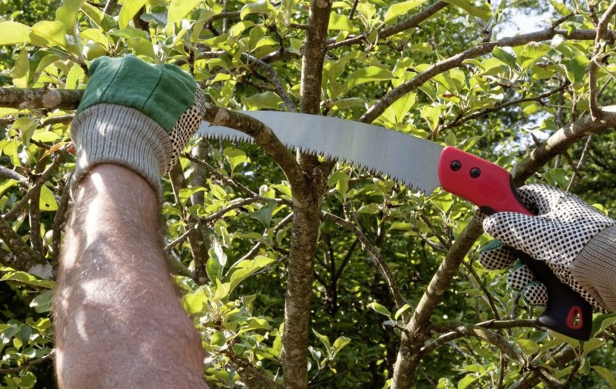 Pruning marvellous