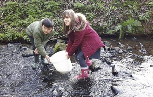 Outdoors: Belfast schools get hooked on raising salmon