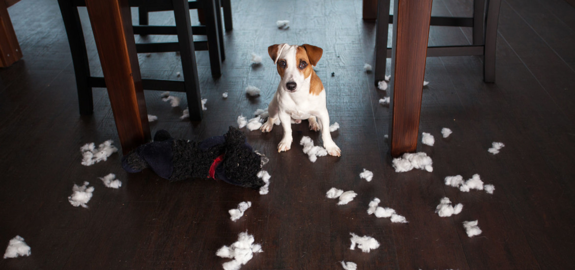 the 5 most common bad behaviour traits of dogs in northern ireland