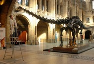 This 130-year-old fact about dinosaurs might be wrong after all, scientists say
