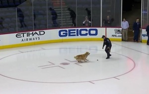 Video: This good, good dog chasing a puck on an ice rink is living its best life
